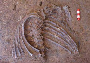 Esqueleto de neandertal