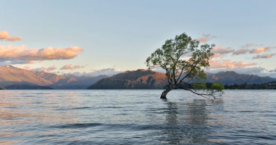 árbol Wanaka