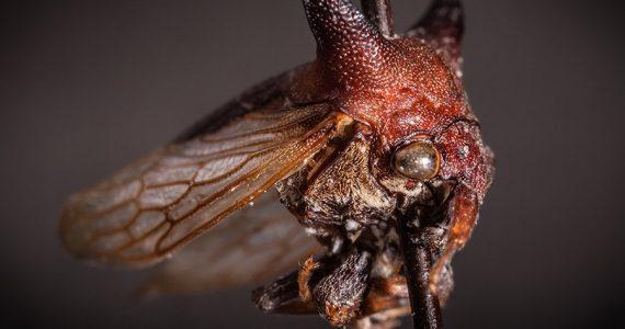 insecto gaga