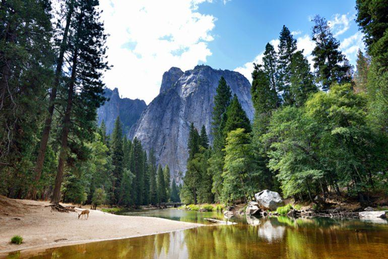 Yosemite osos negros