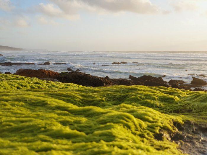 corales biónicos arrecifes