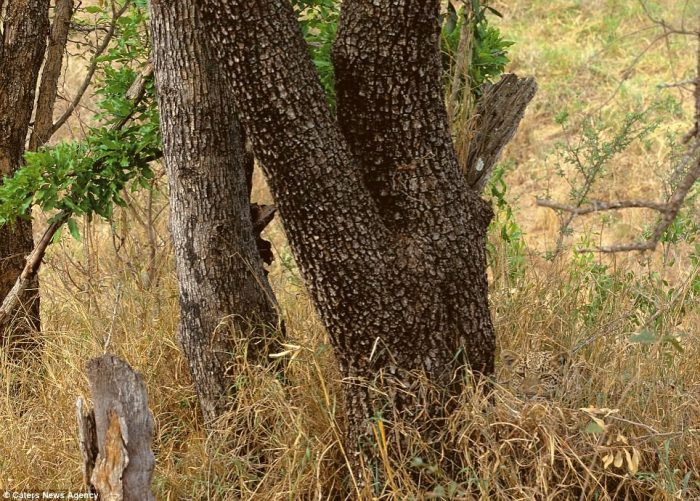 animales ocultos fotos