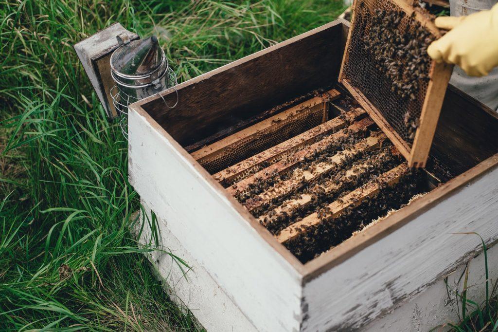jardines abejas México Coyoacán