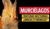 murciélagos entrevista Rodrigo Medellín