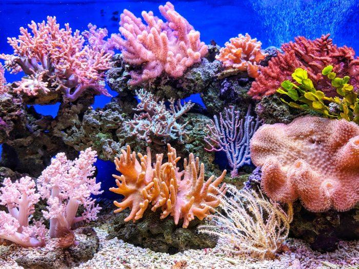 NASA mapear arrecifes de coral