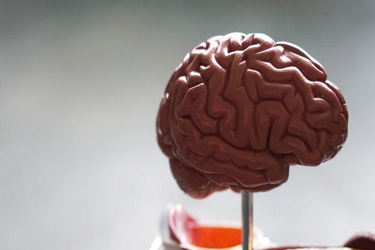 pliegues en el cerebro