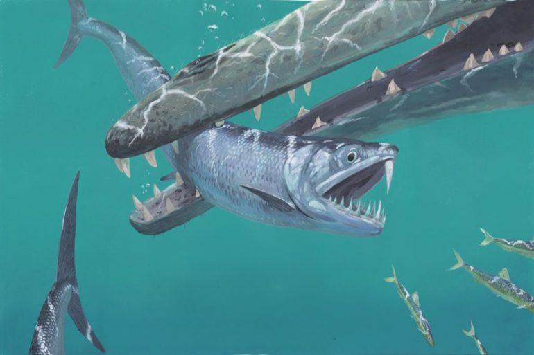 Las anchoas prehistóricas con dientes de sable