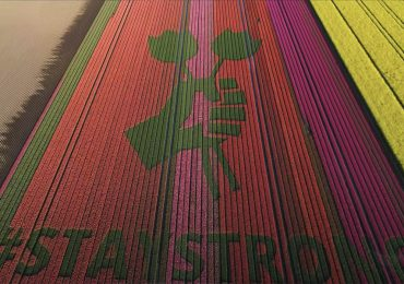 campos de tulipanes mensaje esperanza
