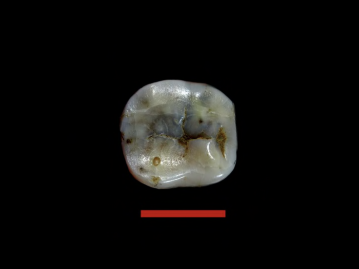 diente bulgaria