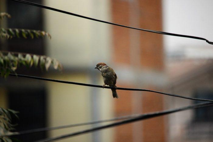 pájaros cables