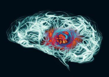 cerebro estrés yale