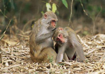 monos muestras de sangre