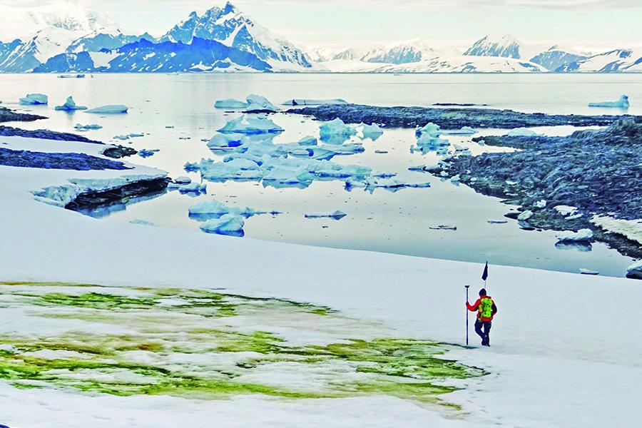 Nieve verde se extiende en la Antártida debido al cambio climático ...
