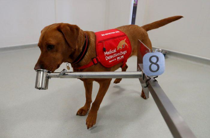 perros detectar covid-19
