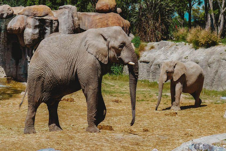 elefantes cáncer