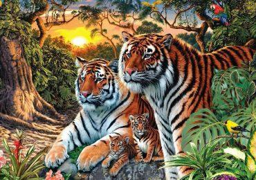 tigres ilusión óptica