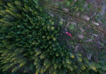 Sudamérica deforestación