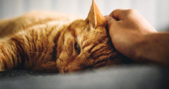 gato covid–19