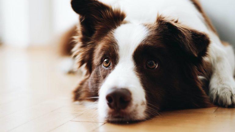 edad-de-perros