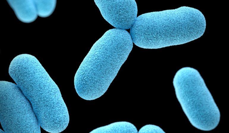 microbioma humano