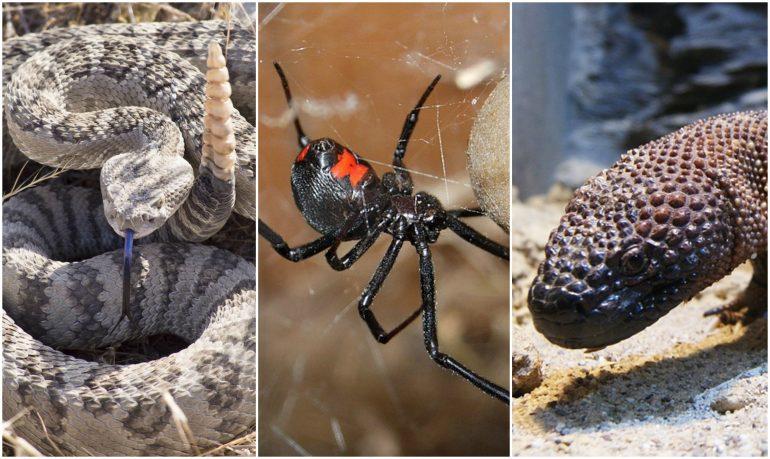 Animales venenosos en México