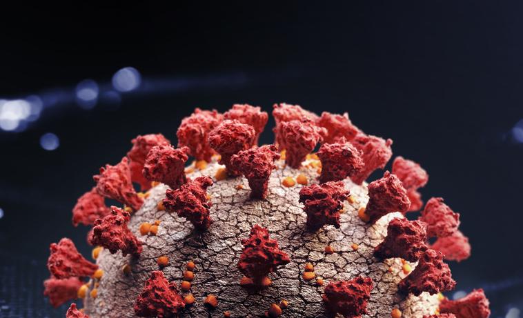 coronavirus Mónica olvera