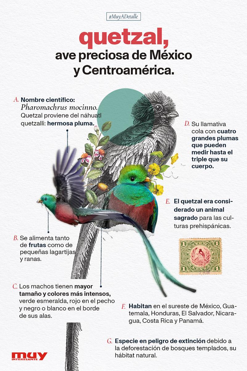 Quetzal, ave preciosa de México y Centroamérica