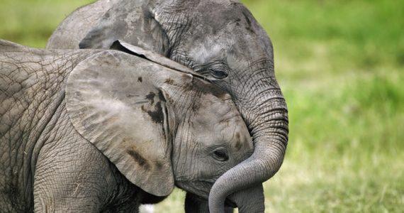 elefantes y la muerte