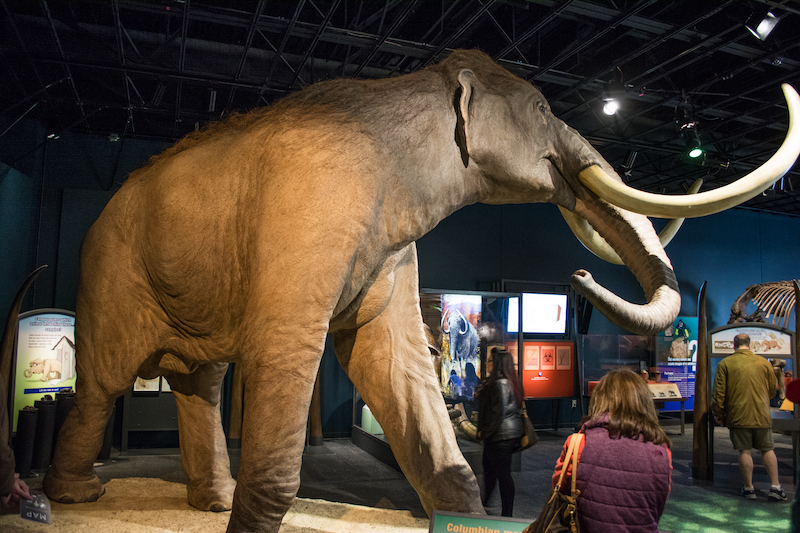 mamuts en santa lucía