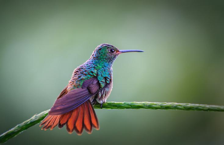 colores colibríes