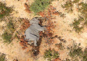 Botsuana elefantes