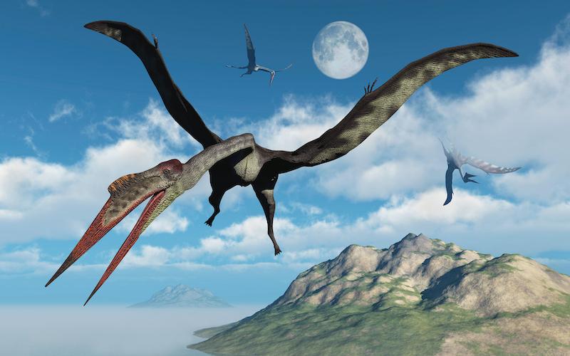 Quetzalcoatlus El Dinosaurio Volador Mas Grande Que Jamas Ha Existido Muy Interesante 'lagartos terribles') son un grupo de saurópsidos que aparecieron durante el período triásico. quetzalcoatlus el dinosaurio volador mas grande que jamas ha existido muy interesante