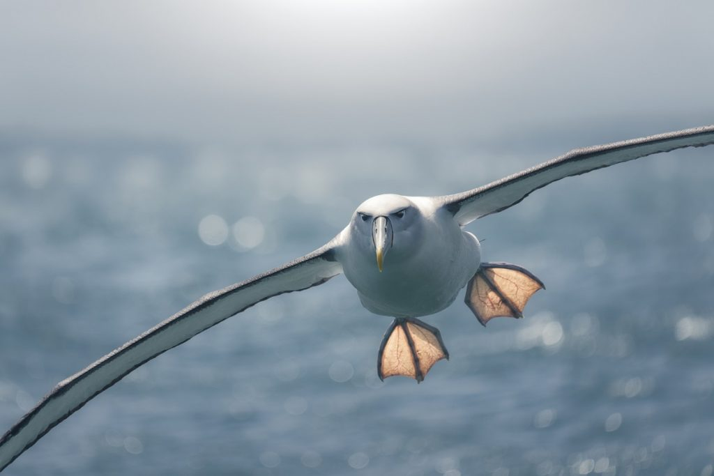 albatros ave pajaro del mar oceano mala suerte