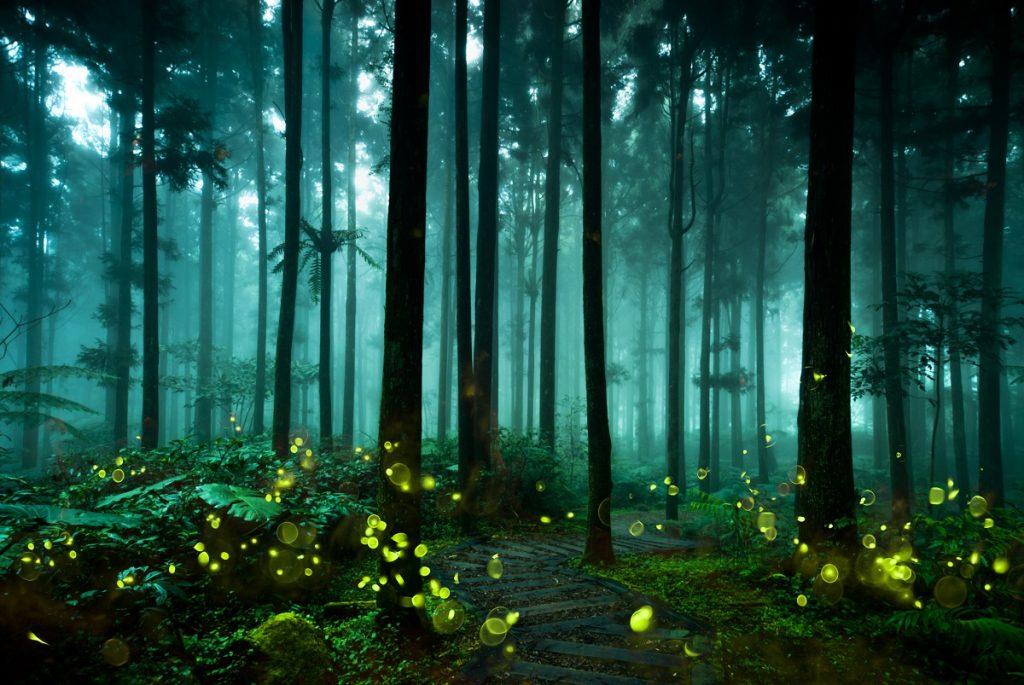 luciernagas en el bosque noche arboles
