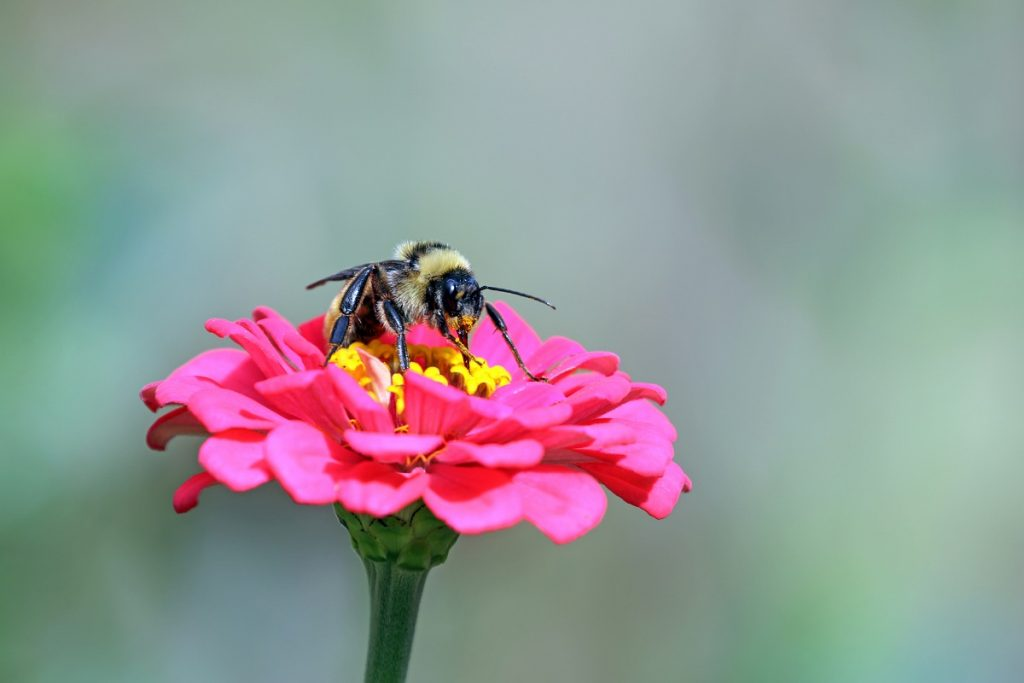 Abejas curiosidades y datos sorprendentes flor