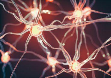 Ayahuasca neuronas
