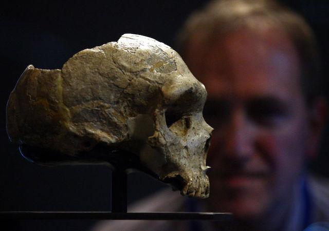 homo sapiens guerra neandertales