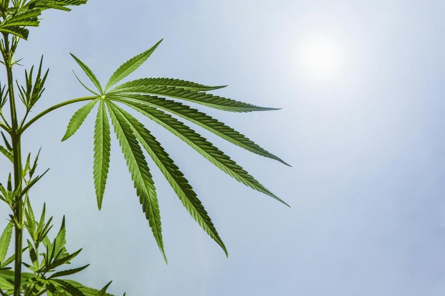 uso lúdico de la marihuana definición