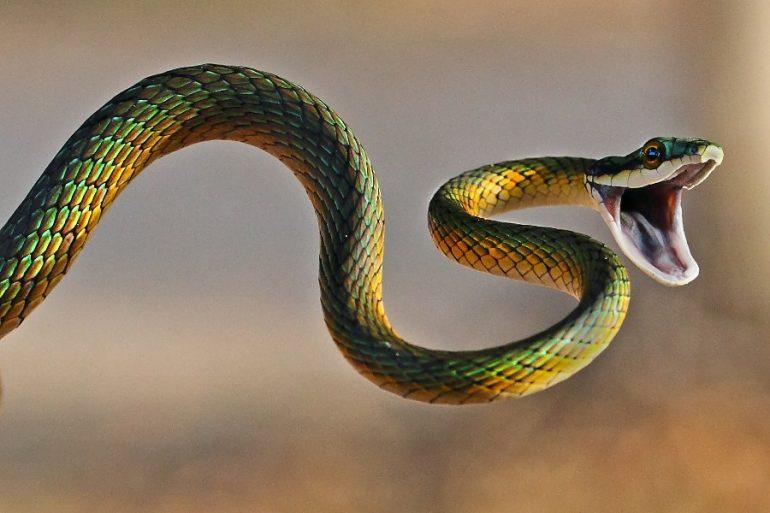 que significa soñar con viboras o serpientes