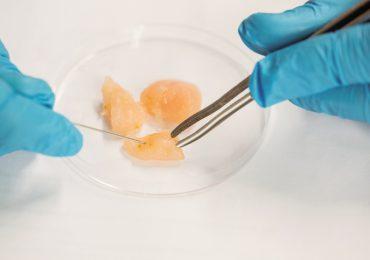 Singapur aprueba carne de laboratorio