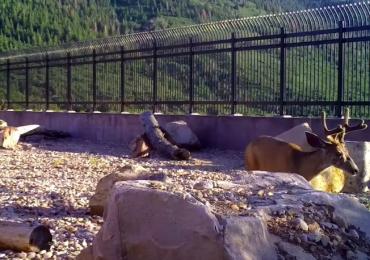 Utah puente para fauna