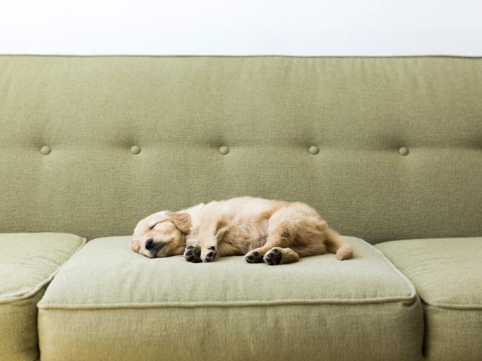 los sueños más comunes de tu perro