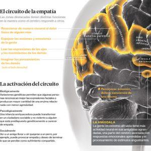 cómo funciona la empatía en el cerebro