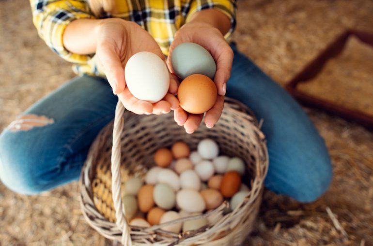 huevos rojos o blancos