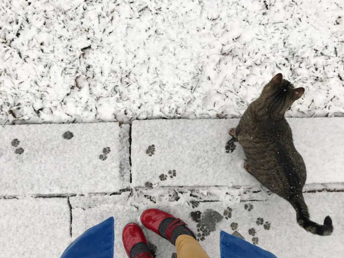 mascota tiene frío