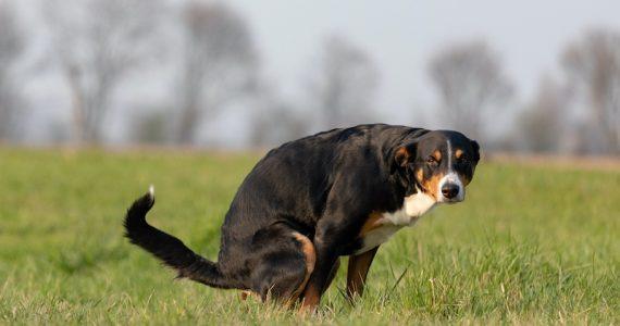 perros campo magnético Tierra