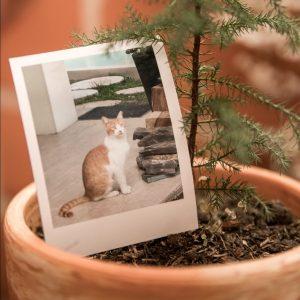 fertilizante con restos de mascotas