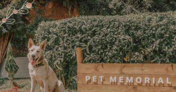 convertir mascotas en fertilizante