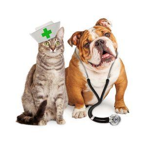 Mascotas en el veterinario
