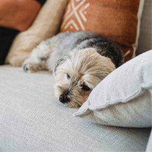 Perro enfermo y triste